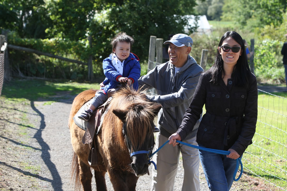 Pony Rides at Lionel's Petting Farm in Markham, ON Canada