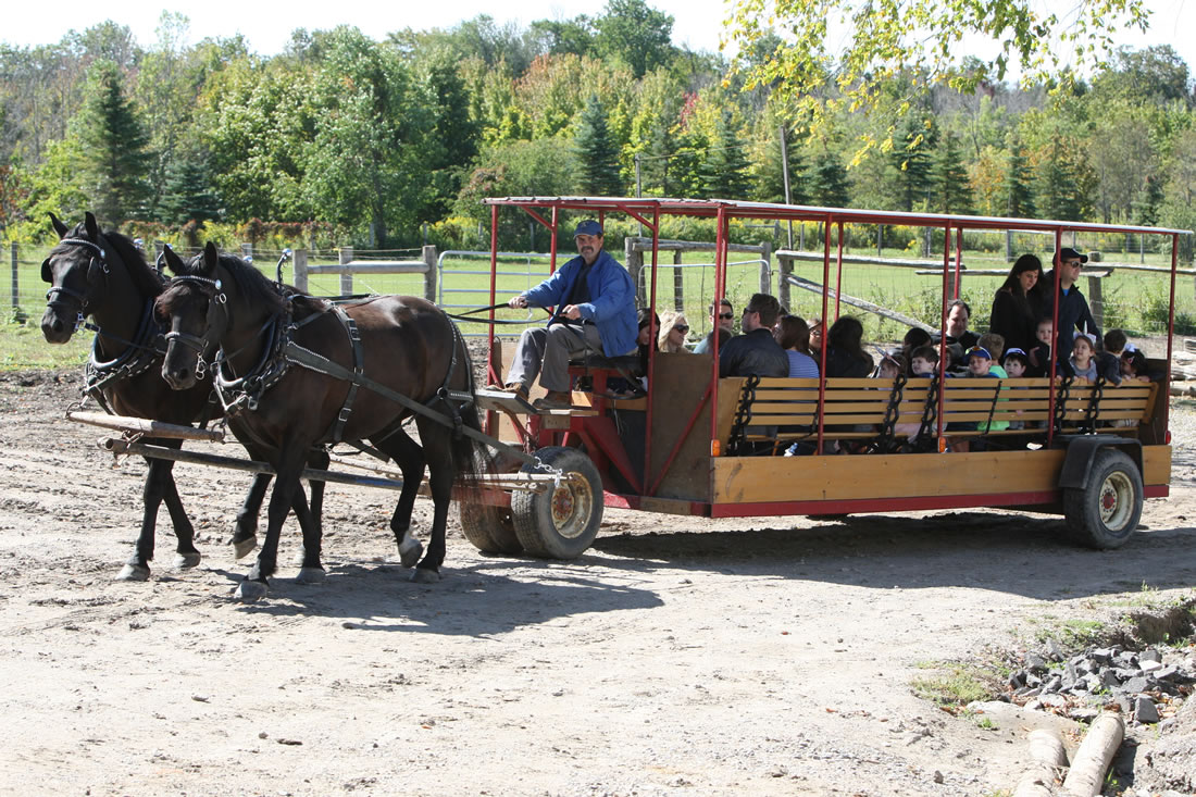 Wagon Rides at Lionel's Pony Farm