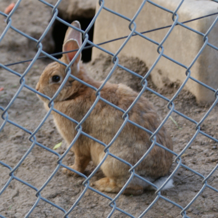 rabbits at Lionel's Pony Farm